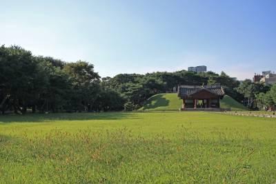 ženšen korejský pětilistý