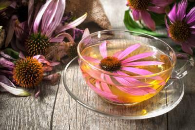 čaj z echinacey